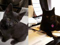 Shiva and Brahma: Studio Cats